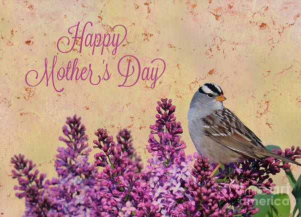 Photograph - Sparrow In The Lilacs Mother's Day Card by Carol Groenen