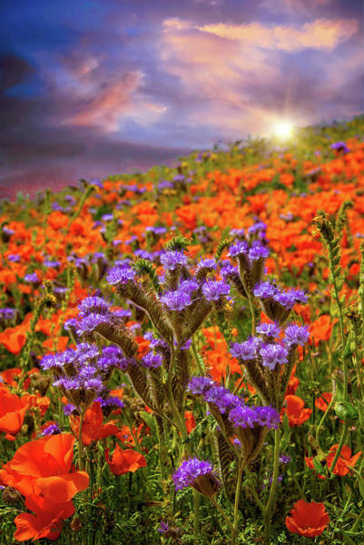 Photograph - Special Moments In Time - Superbloom 2019 by Lynn Bauer