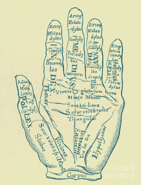 Wall Art - Drawing - Specimen Of The Left Hand by Unknown