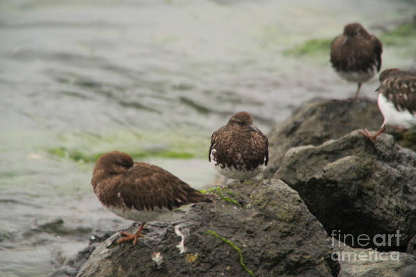 Wall Art - Photograph - Speckled Bird's Napping To Gentle Lapping Waves by Jeff Swan