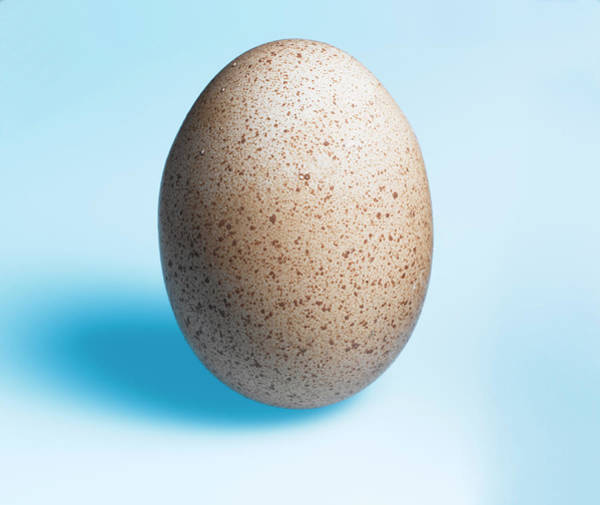 Wall Art - Photograph - Speckled Egg by Adrian Burke