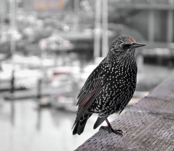 Photograph - Speckled Friend by JAMART Photography