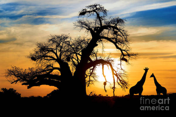 Wall Art - Photograph - Spectacular Sunset With Baobab And by Sw stock