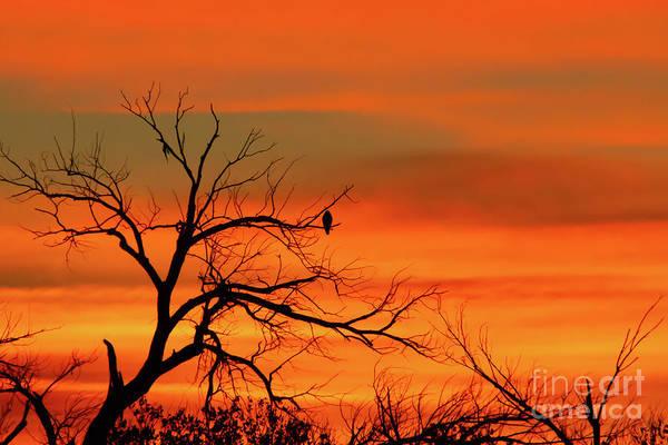 Photograph - Spectacular Winter Sunrise by Sabrina L Ryan