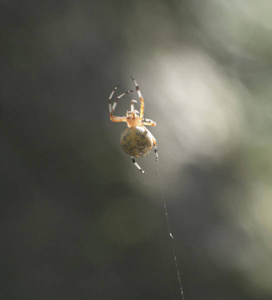 Photograph - Spider by Paul Ross