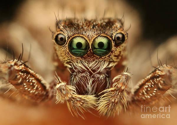 Fly Wall Art - Photograph - Spider by Vasekk