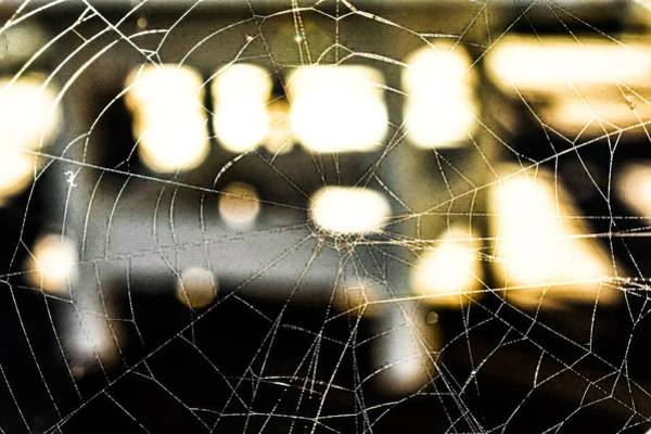 Photograph - Spider Web 2 by Jeremy Guerin