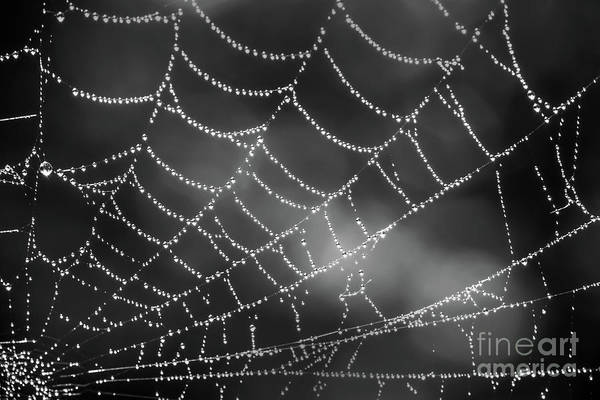 Wall Art - Photograph - Spider Web Black And White by Delphimages Photo Creations