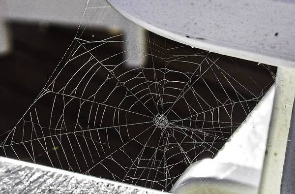 Photograph - Spider Web by Jeremy Guerin
