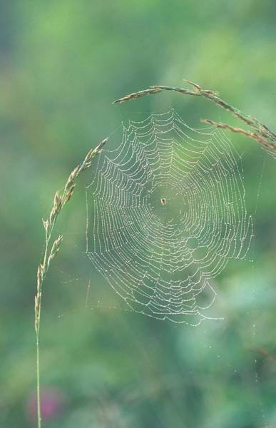 Wall Art - Photograph - Spider Web by Michael Lustbader