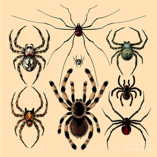 Wall Art - Digital Art - Spiders by Alena Kozlova
