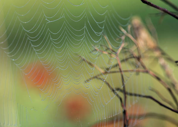 Photograph - Spiderscape by Robert Potts
