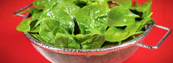 Leafy Greens Photograph - Spinach Colander Panorama by Steve Gadomski