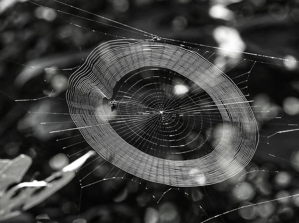 Photograph - Spinning My Web by Paul Ross