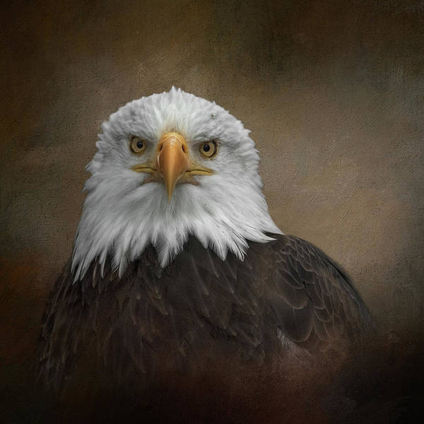 Photograph - Spirit Of Freedom by Kelley Parker