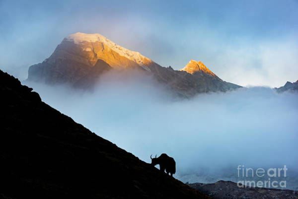 Gokyo Photograph - Spirit Of The Mountain by Peng Shi