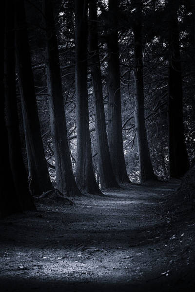 Photograph - Spirits Of The Forest by Edgar Laureano