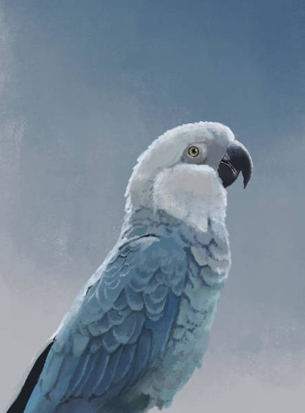 Parrot Digital Art - Spix Macaw by KC Gillies