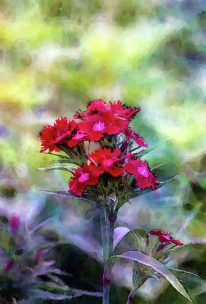 Photograph - Splash Of Crimson 7217 Idp_2 by Steven Ward