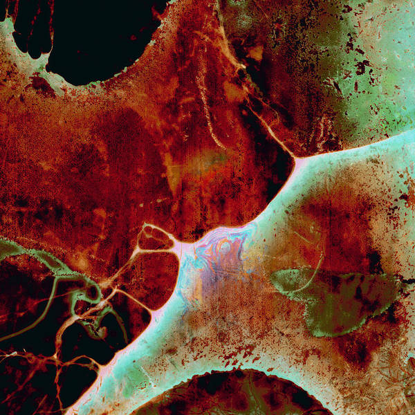 Rust Fungus Photograph - Splatter Grunge Wallpaper by Jitalia17