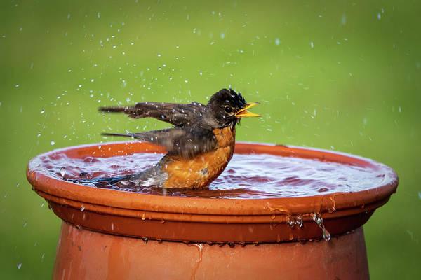 Photograph - Splish Splash #1 by David Heilman