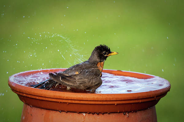 Photograph - Splish Splash #2 by David Heilman