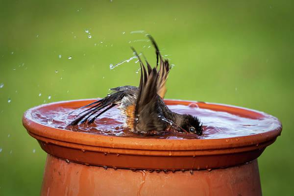 Photograph - Splish Splash #3 by David Heilman