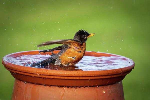 Photograph - Splish Splash #5 by David Heilman