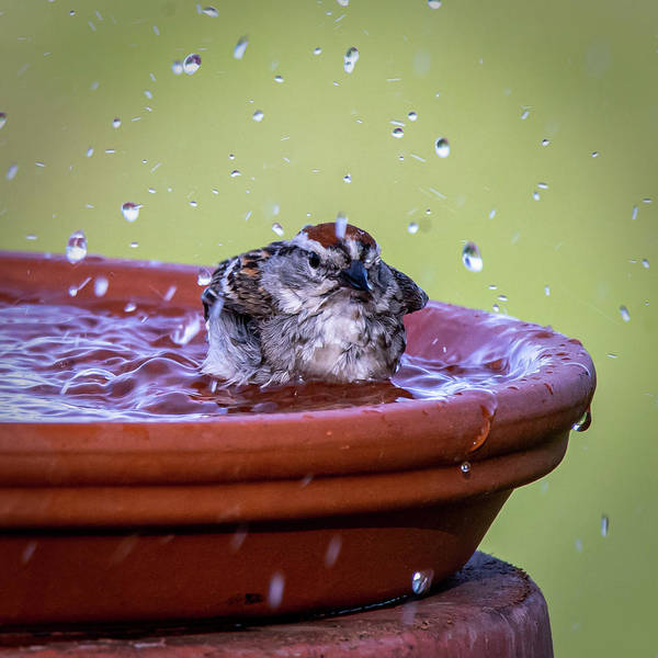 Photograph - Splish Splash by David Heilman