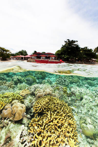 Coral Photograph - Splitshot, Coral Reef, Boat And Coast by Ifish