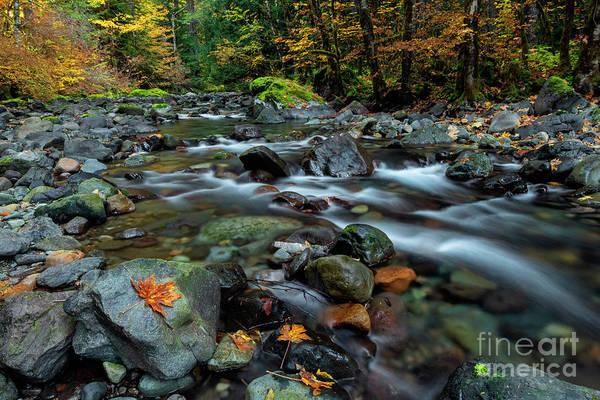 Wall Art - Photograph - Splitting Autumn by Mike Dawson