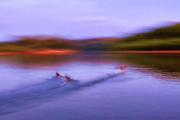 Photograph - Spooked Ducks by Robert FERD Frank