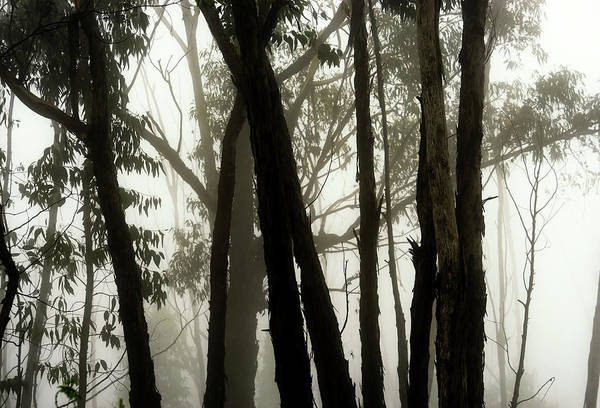 Photograph - Spooky Forest by Christopher Johnson