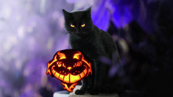 Photograph - Spooky Halloween Cat And Pumpkin by Doc Braham