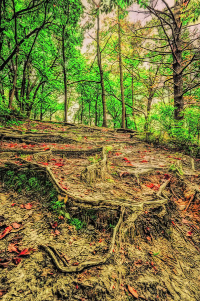 Photograph - Spooky Root Path In The Park by Gary Slawsky