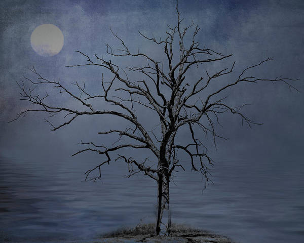 Photograph - Spooky Snag by Cathy Kovarik