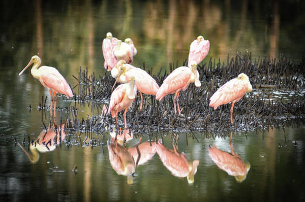 Photograph - Spoonbill Reflection by Scott Hansen