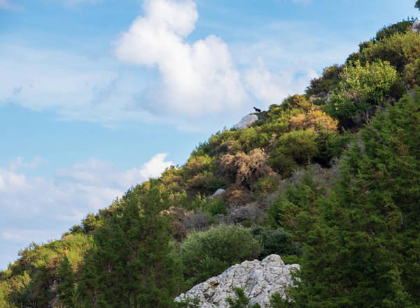 Nature Wall Art - Photograph - Spot The Black Goat by Iordanis Pallikaras