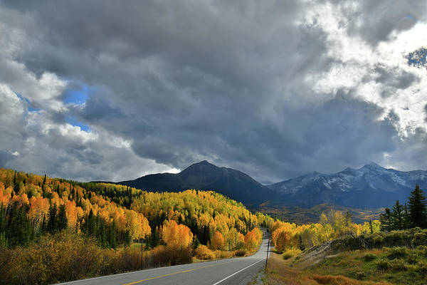 Photograph - Spotlight On Aspens Along Highway 145 by Ray Mathis