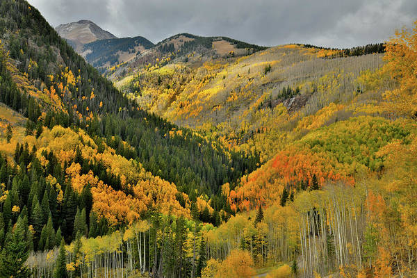 Photograph - Spotlight On Fall Colors Along Highway 145 by Ray Mathis