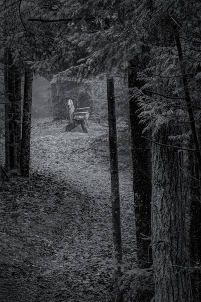 Photograph - Spotlight On The Bench by David Heilman