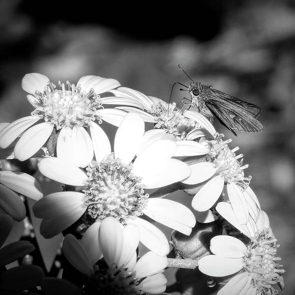 Photograph - Spotlight To Pollinate by Robert Stanhope