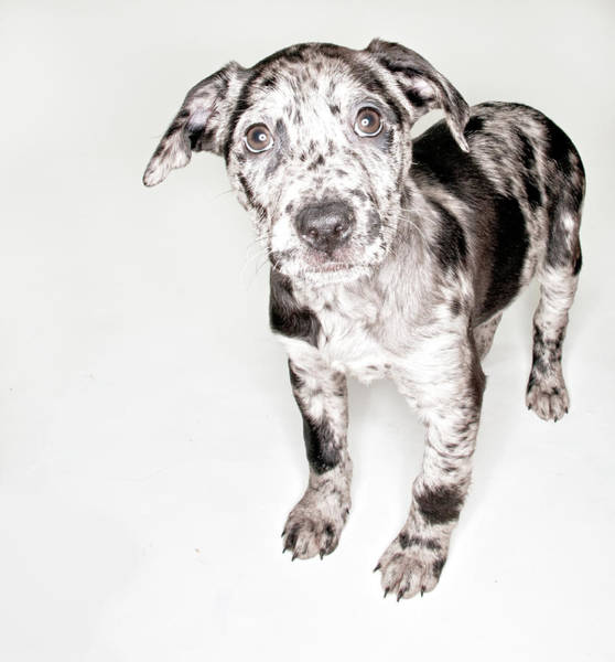 Puppy Photograph - Spotted Puppy by Chad Latta