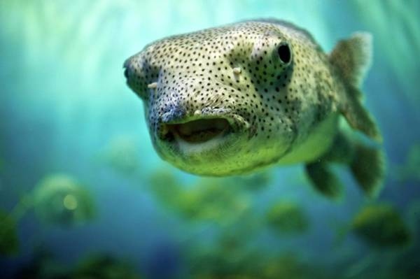 Underwater Camera Photograph - Spotted Tropical Fish by Image By Joseph Delgado Photography