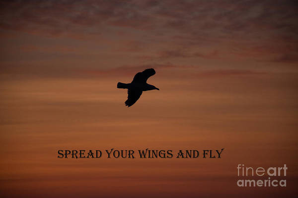 Wall Art - Photograph - Spread Your Wings And  Fly by Ellen Weist