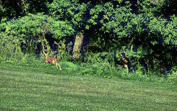 Photograph - Sprightly Spot by Jamart Photography
