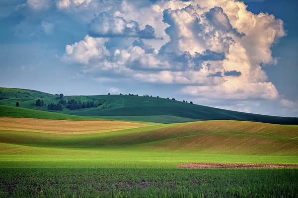Photograph - Spring Afternoon In The Palouse by Rick Berk