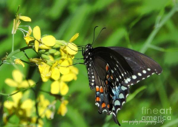 Photograph - Spring Alightment by Tami Quigley