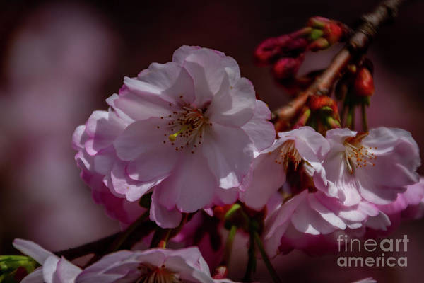 Wall Art - Photograph - Spring Arrives by William Norton