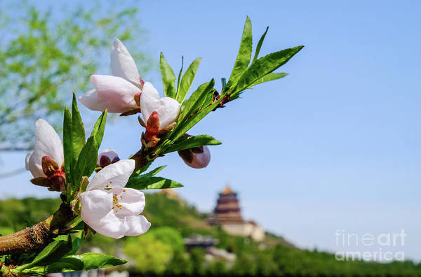 Photograph - Spring At The Summer Palace by Iryna Liveoak